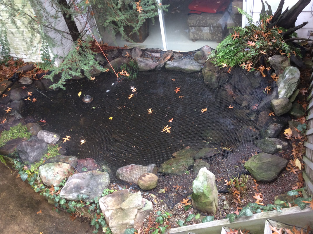 category backyard ponds dreamscapeswatergardens com