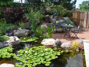 Fish & Koi Pond Contractor/Builder/Designer/Installer